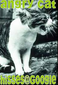 angry-cat-2.jpg